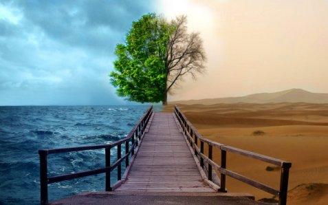 3712_Ocean-versus-Desert-greened-tree-versus-dry-tree