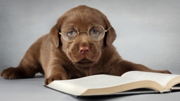 1404444716funny_dog_eyeglasses_studying_book_practice_ComputerDesktopWallpapersCollection831_054